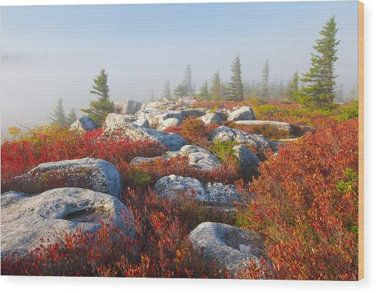 The Fog Clears At Dolly Sods Wood Print
