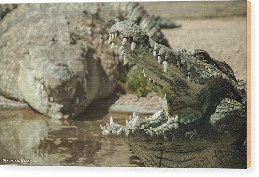 Wood Print featuring the photograph The Fool Crocodile by Stwayne Keubrick