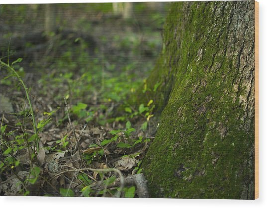 The Foot Of A Tree Wood Print by Michael Williams