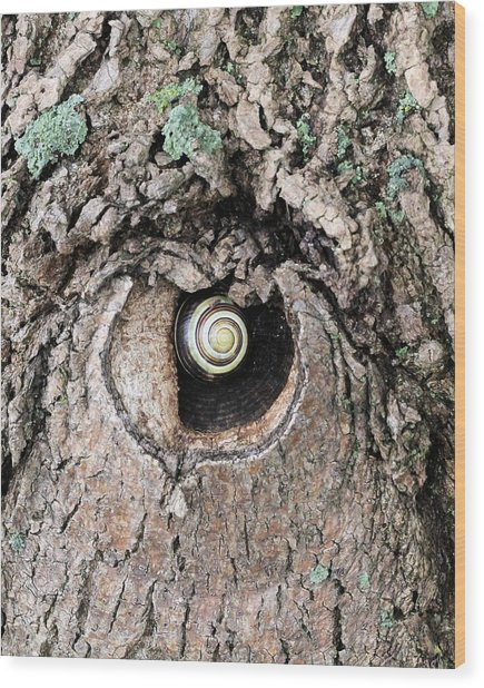 The Forest Is Watching Wood Print