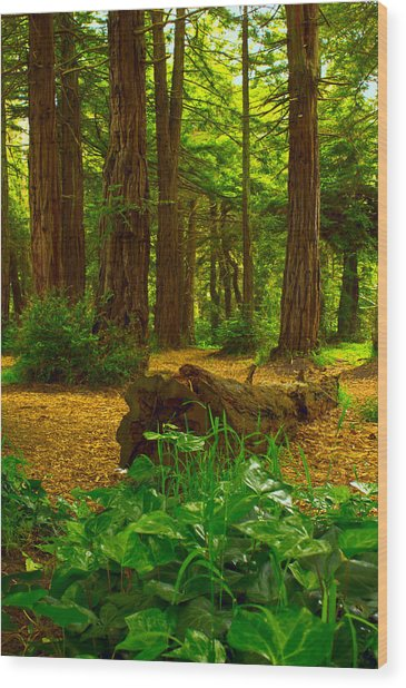 The Forest Of Golden Gate Park Wood Print