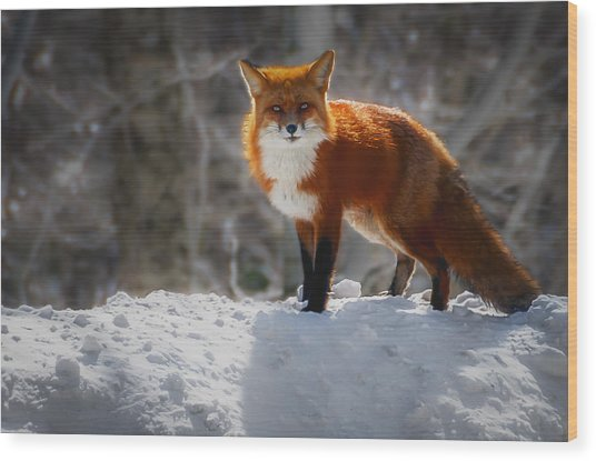 The Fox 4 Wood Print