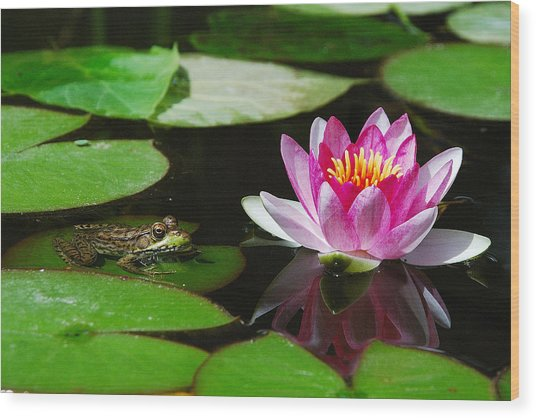 The Frog And The Lily Wood Print