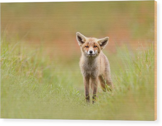 The Funny Fox Kit Wood Print