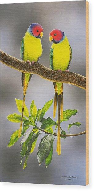 The Gorgeous Guys - Plum-headed Parakeets Wood Print