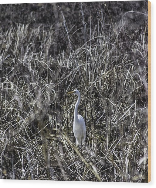 The Great Egret Wood Print by Kris Rowlands