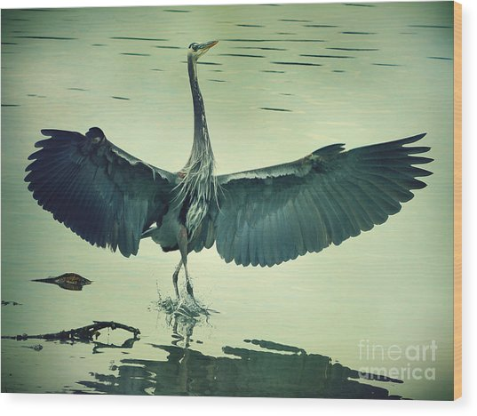 The Great Blue Heron Landing Wood Print