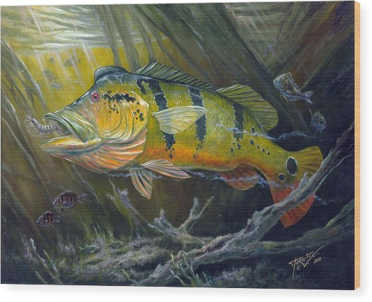 The Great Peacock Bass Wood Print