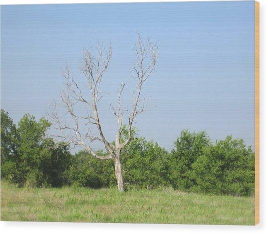 The Hanging Tree Wood Print by Rosalie Klidies
