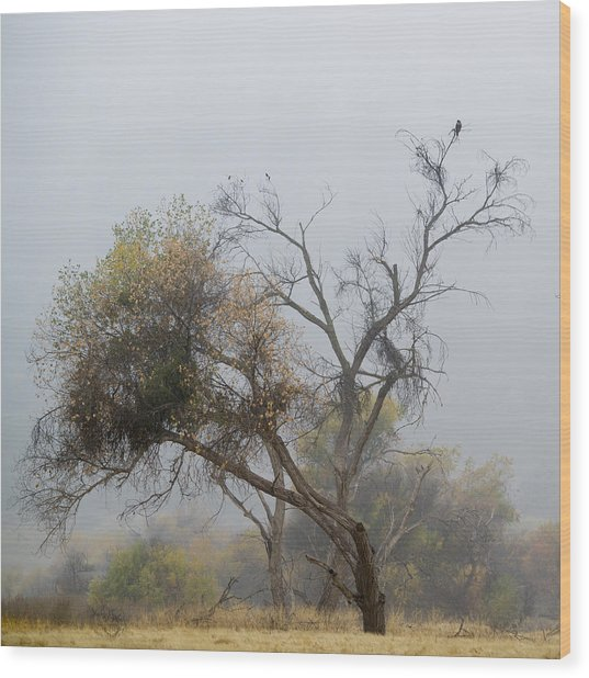The Hawk Wood Print by Darin McQuoid