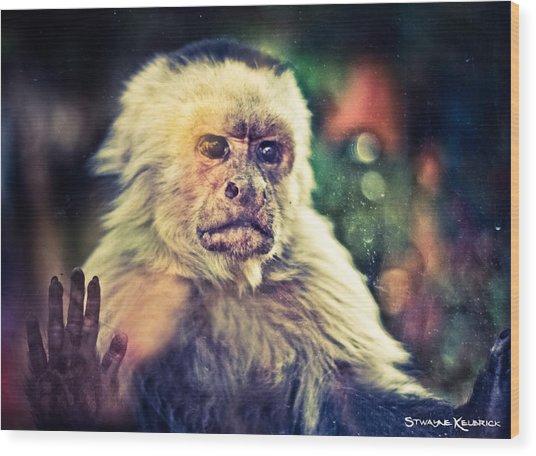 Wood Print featuring the photograph The Hopeless Ape by Stwayne Keubrick