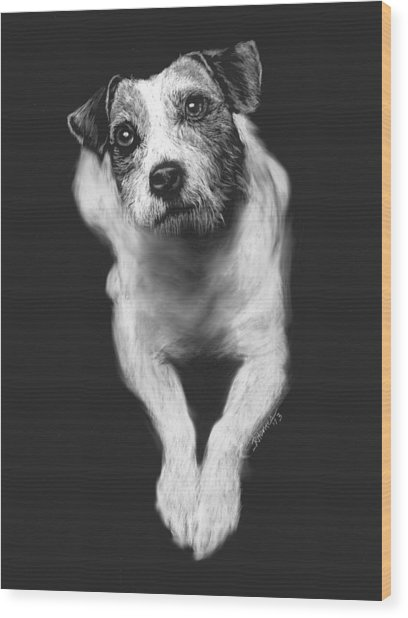 The Jack Russell Stare- Got Ball? Wood Print