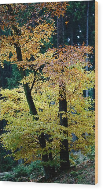 The Joy Of Being In Autumn Wood Print by Mah FineArt
