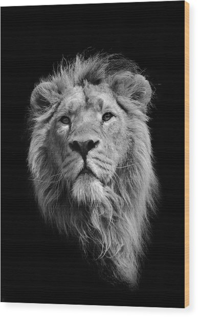 The King Asiatic Lion Wood Print