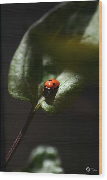 The Lady Bug Wood Print by Phillip Segura