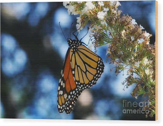 The Last Monarch Of The Season Wood Print
