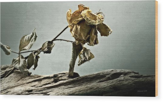 The Last Yellow Rose Of Summer Wood Print