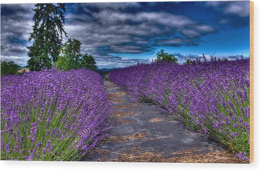 The Lavender Field Wood Print