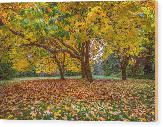 The Leaves Of Autumn Wood Print
