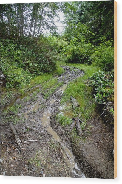The Ledge Point Trail Wood Print