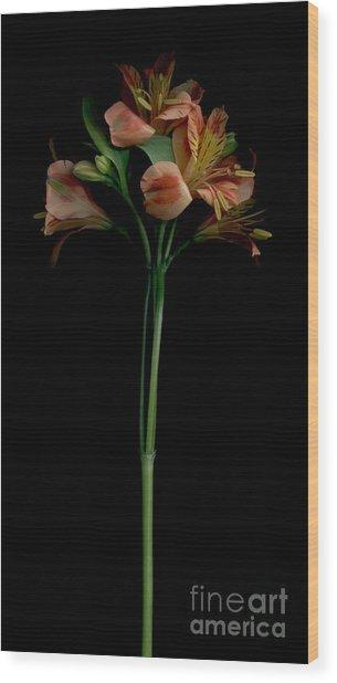 The Lily Group Wood Print by Nancy TeWinkel Lauren