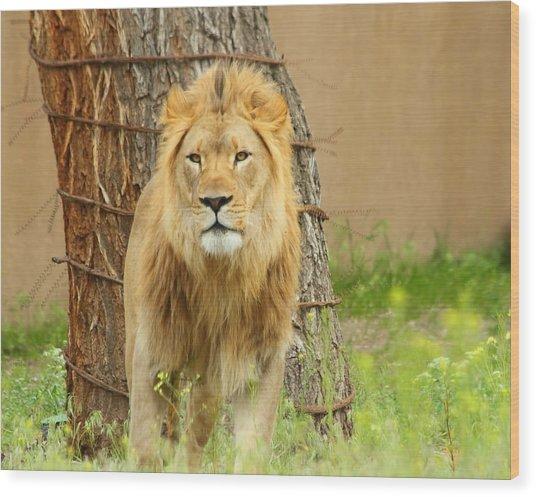 The Lion Wood Print by Gene Praag