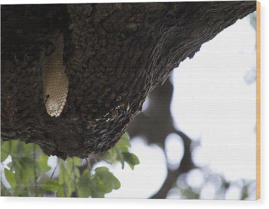 The Live Oak Wood Print