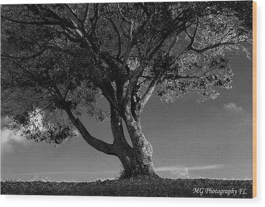 The Lone Tree Black And White Wood Print