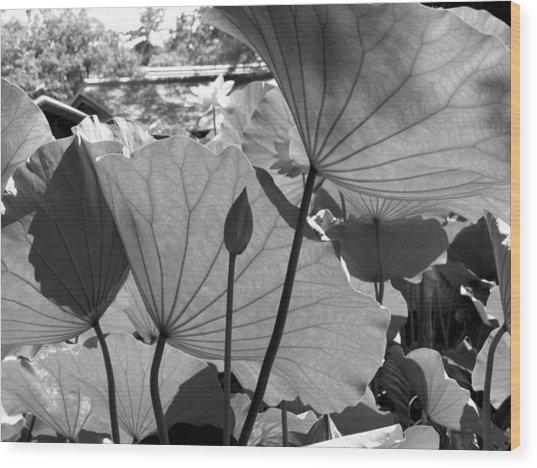 The Lotus Pond Wood Print