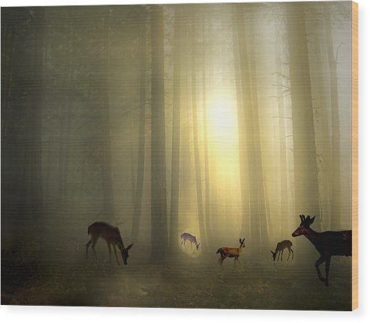 The Magic Of Sunrise Wood Print
