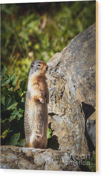 The Marmot Wood Print