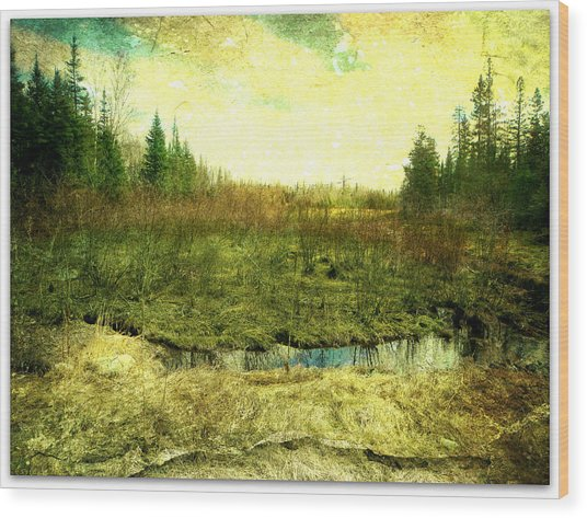 The Marshland  Wood Print by Dianne  Lacourciere