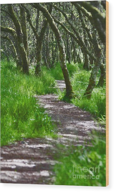 The Meandering Path Wood Print by Lynne Sutherland