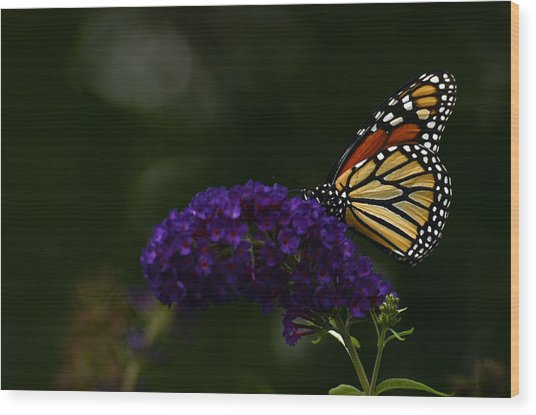 The Monarch Rules Wood Print