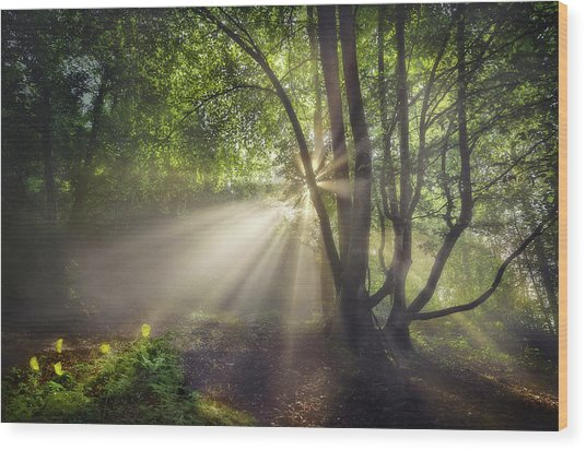 The Morning Light Wood Print by Fran Osuna