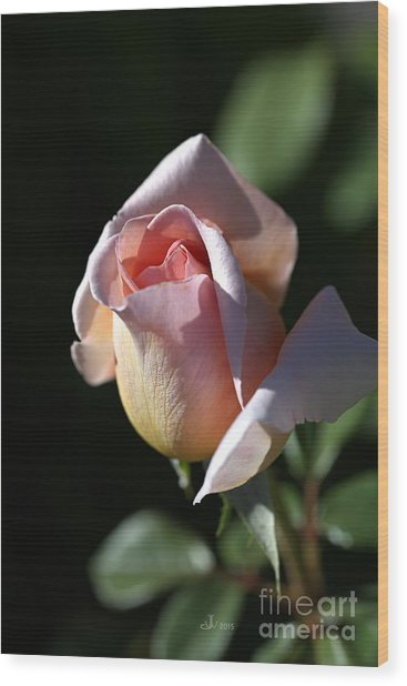 The Morning Pink Rose Wood Print