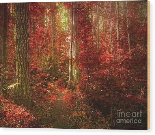 The Mystic Forest Wood Print