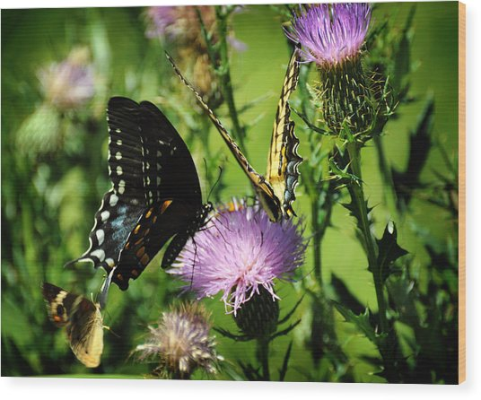 The Nectar Seekers Wood Print