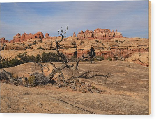 The Needles At Canyonlands National Park Wood Print