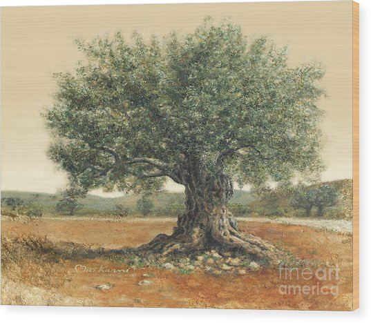 The  Old Olive Tree. By Miki Karni Wood Print