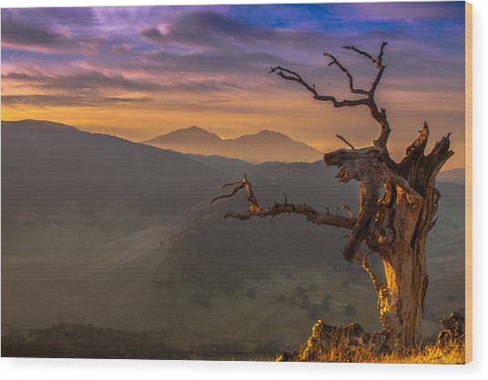 The Old Tree And Diablo Wood Print