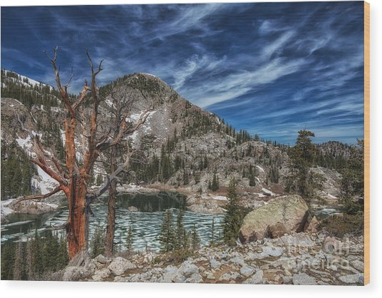 The Old Tree And Lake Mary Wood Print by Mitch Johanson
