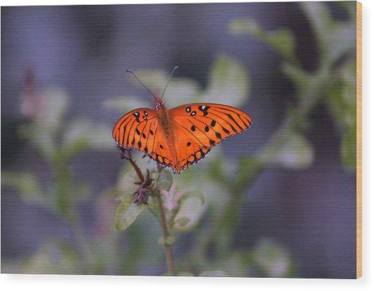 The Orange Wings Wood Print