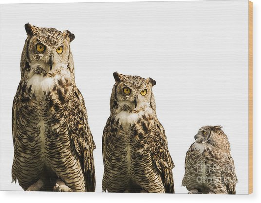 The Owl Trio Wood Print