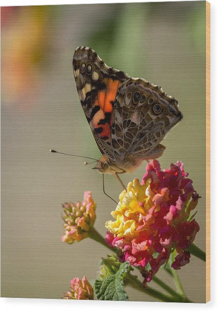 The Painted Lady Wood Print