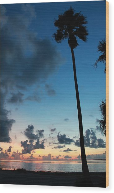 The Palm Majestic Sunset Beach Tarpon Springs Florida Wood Print
