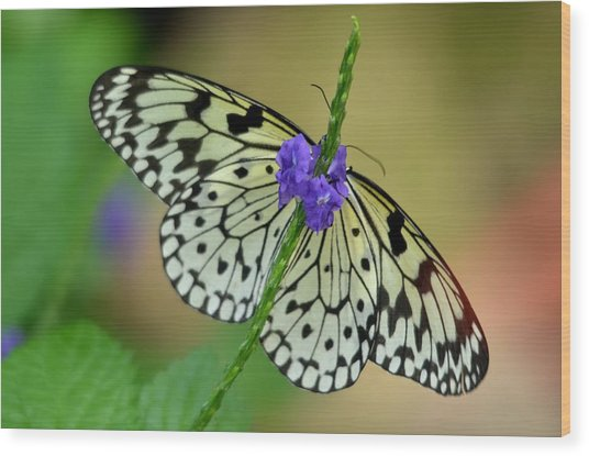 The Paper Kite Butterly Wood Print
