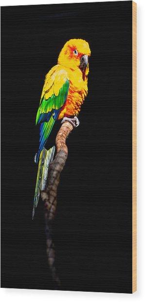 The Parrot Wood Print by Dasmin Niriella
