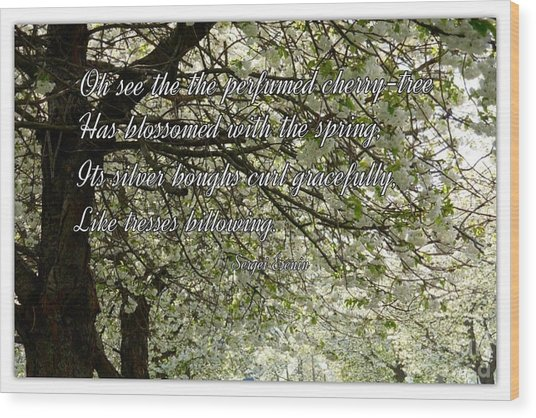 The Perfumed Cherry Tree 1 Wood Print