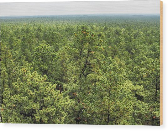 The Pinelands Wood Print by Dawn J Benko